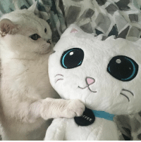 """Memes, Toys, and 🤖: FFEE Happy Saturday❤️ my plush toy available at www.nalacat.com Use coupon code """"extra15"""" for additional 15% off everything in store!"""