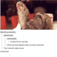 Alive, Funny, and God: fiaht-off-yourdemons  amanderegg  rawtranquility  A flower for you my lady  Sloths are what happens when coconuts come alive  A flower for you, my lady.  That comment makes sense  so precious That makes sense TBH... Follow me ( @god.of.appleysauce )for more funny tumblr and textpost