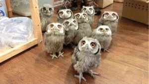 fierceawakening:  delgrosso: YES HELLO WE HEARD IT WAS SUPERB OWL SUNDAY SO WE HAVE COME TO HAVE NACHOS WITH U Superb. : fierceawakening:  delgrosso: YES HELLO WE HEARD IT WAS SUPERB OWL SUNDAY SO WE HAVE COME TO HAVE NACHOS WITH U Superb.