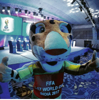 Fifa, Memes, and India: FIFA  InDIA 2017  FIFA  17 WORLD  INDIA 2017 Kheleo is ready! The FIFAU17WC draw is tomorrow, and the Official Mascot is here warming up at the rehearsal. Tune in on FIFA.com to watch the Official Draw live from 19:00 local time 🇮🇳