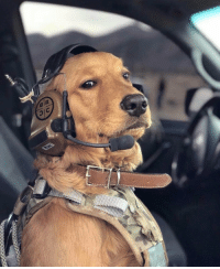 Memes, 🤖, and Dog: Fifth deployment and they still don't realize I'm a dog. https://t.co/SnHr5v1ffu
