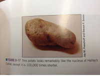 """Anaconda, Target, and Tumblr: FIGURE 8-17 This potato looks remarkably like the nucleus of Halley's  Comet, except it is 100,000 times shorter. <p><a class=""""tumblr_blog"""" href=""""http://poetryandthoughts.tumblr.com/post/99939595124/i-dare-you-to-put-this-picture-of-a-potato-in-the"""" target=""""_blank"""">poetryandthoughts</a>:</p>  <blockquote> <p>&ldquo;I dare you to put this picture of a potato in the astronomy textbook.&rdquo;</p> </blockquote>"""