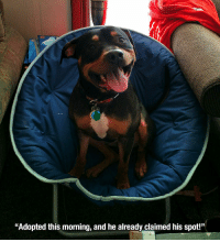 """<p>Home sweet home</p>: Fil  """"Adopted this morning, and he already claimed his spot!"""" <p>Home sweet home</p>"""
