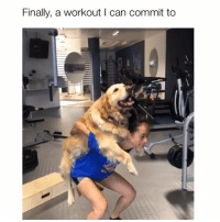 Dogs, Memes, and 🤖: Finally, a workout I can commit to Lift dogs, not weights 😂 Credit: @camila.wbavaresco