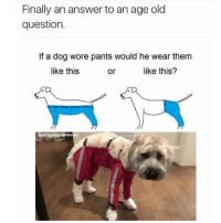 Awe doggo Pupper Ha ha. I'm weak flatlined dead pettypost nochill teamnoharmdone noharmdone: Finally an answer to an age old  question.  If a dog wore pants would he wear them  like this  like this?  or  actually notevan Awe doggo Pupper Ha ha. I'm weak flatlined dead pettypost nochill teamnoharmdone noharmdone