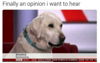 Memes, Bbc News, and 🤖: Finally an opinion i want to hear  BOUNCE  Spokes dog  BBC  NEWS 15:27 EOPLE FROM THEIR HOMES IN CUMBRIA, SOME FOR THE TH