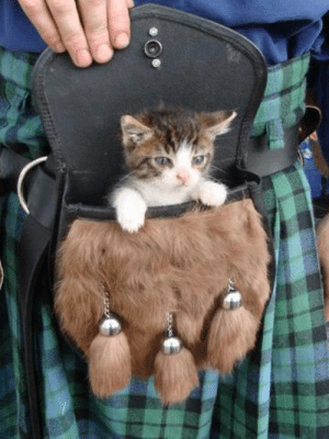 Finally found out what the little pouch is for if you wear a kilt.: Finally found out what the little pouch is for if you wear a kilt.