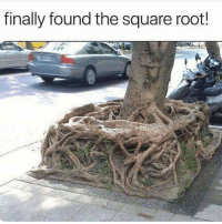 Memes, School, and Square: finally found the square root! Went to school for 12 years just to find out that the square root has been there the whole time. mathmemes