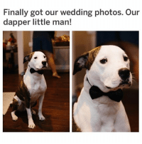 (@hilarious.ted) is the BEST animal meme page! (Reddit u-dn151864): Finally got our wedding photos. Our  dapper little man! (@hilarious.ted) is the BEST animal meme page! (Reddit u-dn151864)