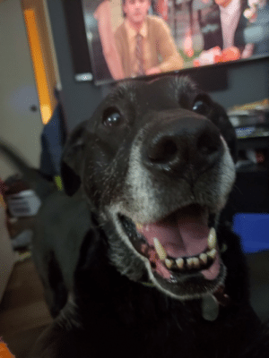 Finally got proof my old girl can smile for the camera. Only a little bit of sushi was involved.: Finally got proof my old girl can smile for the camera. Only a little bit of sushi was involved.