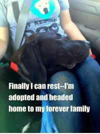 Family, Memes, and Forever: Finally I can rest--I'm  adopted and headed  home to my forever family
