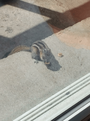 Finally lured this little guy out from the house. Now he scratches at the door for food.: Finally lured this little guy out from the house. Now he scratches at the door for food.