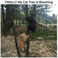 Memes, Tree, and 🤖: FINALLY My Cat Tree Is Blooming