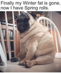 Funny and Cute Pug Pictures :): Finally my Winter fat is gone,  now I have Spring rolls. Funny and Cute Pug Pictures :)