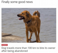 Anaconda, Memes, and News: Finally some good news  INCIDENTS  Dog travels more than 100 km to bite its owner  after being abandoned Following @drgrayfang is the best decision you will make all day!