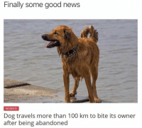 Anaconda, Beautiful, and Funny: Finally some good news  INCIDENTS  Dog travels more than 100 km to bite its owner  after being abandoned Beautiful. https://t.co/I7wfcS6GCr