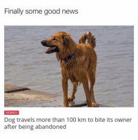 Anaconda, Memes, and News: Finally some good news  INCIDENTS  Dog travels more than 100 km to bite its owner  after being abandoneg amazing @drgrayfang