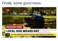"Funny, News, and Wow: Finally, some good newS  LIVE  breakyourownnews.com  BREAKING NEWS  LOCAL DOG WEARS HAT  1120 ""HE'S JUST WEARING  11-20  ""HE'S JUST WEARING IT! ON TOP OF HIS LITTLE HEADI WOW! WHAT A GOOD BOY! Nochill 😂😂😂"