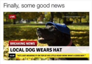 Memes, News, and Wow: Finally, some good news  LIVE  breakyourownnews.com  BREAKING NEWS  LOCAL DOG WEARS HAT  11:20  HE'S JUST WEARING IT ON TOP OF HIS LITTLE HEADI WOW! WHAT A GOOD BOY! I never see any good news any mo- via /r/memes https://ift.tt/2NC8WgA