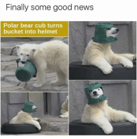 Memes, News, and Snapchat: Finally some good news  Polar bear cub turns  bucket into helmet Snapchat: DankMemesGang 👻👻