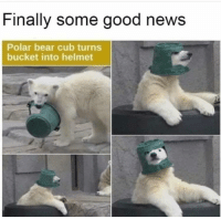 News, Bear, and Good: Finally some good news  Polar bear cub turns  bucket into helmet <p>finally</p>