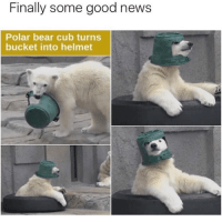 News, Bear, and Good: Finally some good news  Polar bear cub turns  bucket into helmet