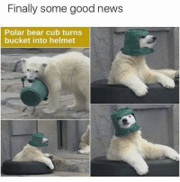 Boxing, Gym, and Bear: Finally some good news  Polar bear cub turns  bucket into helmet 😂😂 . @DOYOUEVEN - 70% OFF BOXING DAY SALE! 🎉 click the link in our BIO ✔️