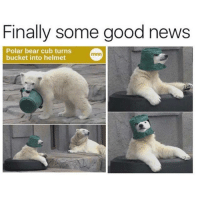 Finally some good news  Polar bear cub turns  min  bucket into helmet
