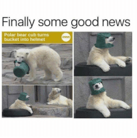 Finally some good news  Polar bear cub turns  minn  bucket into helmet - Donnie/Trending Memes
