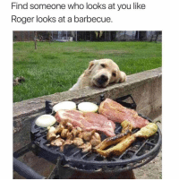 Gym, Roger, and How: Find someone who looks at you like  Roger looks at a barbecue This is how I look at gains. ❤️🐶
