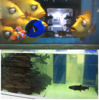 Finding Dory vs real life