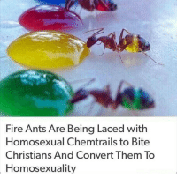 Ghetto, Memes, and Prank: Fire Ants Are Being Laced with  Homosexual Chemtrails to Bite  Christians And Convert Them To  Homosexuality Wake up people, most people didnt know bout this shit ——————————————————————————————————————— My other accounts: @themememonk @memedoctor_ ————————————————————— mememonkmememonk mememonk bruh lmao hood meme chill nochill comedy pepe l4l ghetto dank dankmeme dankmemes memes lmfao triggered dank filthyfrank itslit lit realniggahours petty lol funny prank bestmemes bestmeme