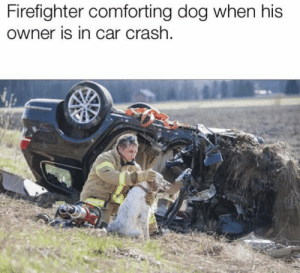 https://t.co/spW1rhSrzR: Firefighter comforting dog when his  owner is in car crash. https://t.co/spW1rhSrzR