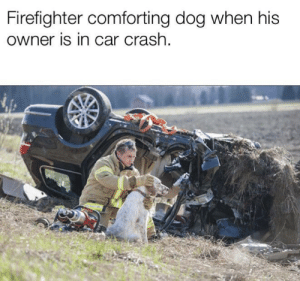Thank god for people like him.: Firefighter comforting dog when his  owner is in car crash Thank god for people like him.