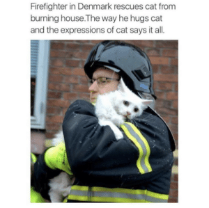 Tumblr, Blog, and Denmark: Firefighter in Denmark rescues cat from  burning house.The way he hugs cat  and the expressions of cat says it all. beyoncescock:  this is so heart warming