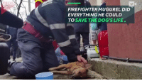 "Desperate, Memes, and Firefighter: FIREFIGHTER MUGUREL DID  EVERYTHING HE COULD  TO SAVE THE DOG'S LIFE. **The dog was saved and began to breath again!!!!!!!** ""This firefighter desperately performs CPR in hopes of saving a dying dog who had collapsed from smoke inhalation."" Firefighters are HEROES!!!!!"