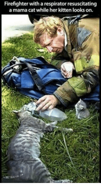 Memes, 🤖, and Kitten: Firefighter with a respirator resuscitating  a mama cat while her kitten looks on.  MEMETAPCI http://t.co/JSwsvXPKRj