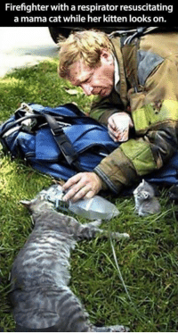 Grumpy Cat, Kittens, and Firefighter: Firefighter with a respirator resuscitating  a mama cat while her kitten looks on.