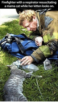 Cats, Cute, and Memes: Firefighter with a respirator resuscitating  a mama cat while her kitten looks on. For more cute pics LIKE us at The Purrfect Feline Page