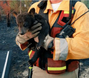 Firefighters Rescued a Baby Bear From a Fire so, of Course, They Named Him Smokey Junior: Firefighters Rescued a Baby Bear From a Fire so, of Course, They Named Him Smokey Junior