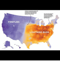 if ten million lightening bugs headasses: Firefiies, increasingly popular with  younger Americans, have been  encroaching on ightning bugs'  territory in recent years.  New York City disagrees  with itself. Manhattan  seems to prefer fireflies  on Staten Island, it's  ightning bugs.  FIREFLIES  LIGHTNING BUGS if ten million lightening bugs headasses