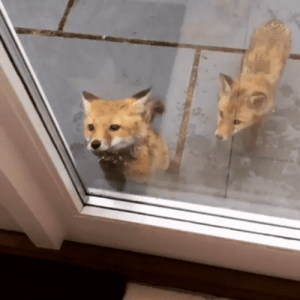 Windows, Firefox, and Hack: Firefox attempting to hack Windows