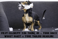 Dogs, Memes, and Email: FIRST CELEBRITY YOU THINK, OF YOUR DOG'S  WORST HABIT  YOUR TABLOID HEADLINE What is your tabloid headline?? Tell us in the comments!l 👇👇 literallytellus . Sign up for the BarkPost email to get more wacky doggo pics like this sent to your inbox! Follow ruv.me-barkemail (in bio) to sign up! . @weirdwiener