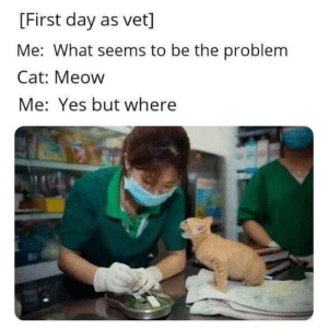 awesomacious:  I can only hope: [First day as vet]  Me: What seems to be the problem  Cat: Meow  Me: Yes but where awesomacious:  I can only hope