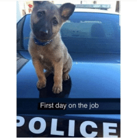 Cute, Memes, and Police: First day on the job  POLICE Follow my other account @x__social_butterfly__x for more cute pics ❤