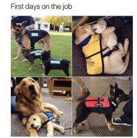I'm gonna go ahead and say they all did flipping great. @memes: First days on the job I'm gonna go ahead and say they all did flipping great. @memes