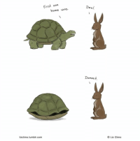 The tortoise and the hare⠀ By @lizclimo⠀ -⠀ comics turtle rabbit 9gag: First one  Dea /  home wins  Dammit.  lizclimo.tumblr.com  O Liz Climo The tortoise and the hare⠀ By @lizclimo⠀ -⠀ comics turtle rabbit 9gag