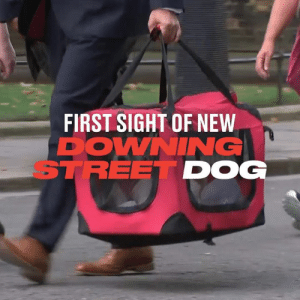 We got our first glimpse of the Prime Minister's new companion as the Downing Street Dog made his entrance... but not everyone was pleased to see him 🐶😾: FIRST SIGHT OF NEW  DOWNING  STREET DOG We got our first glimpse of the Prime Minister's new companion as the Downing Street Dog made his entrance... but not everyone was pleased to see him 🐶😾
