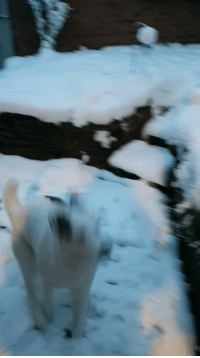First snow zoomies!: First snow zoomies!