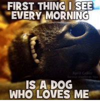 Good Morning!  We hope you had a fab Christmas - welcome back to the working week!  🐕🐾: FIRST THING I SEE  EVERY MORNING  April Collier  German shepherds Tips  IS A DOG  WHO LOVES ME Good Morning!  We hope you had a fab Christmas - welcome back to the working week!  🐕🐾